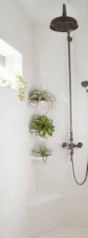Tillandsias aéreas en los estantes de ducha_via decorfacil.com